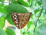 Butterfly Love by Sp00ntaneous