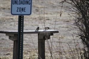 Unloading Zone by exarobibliologist