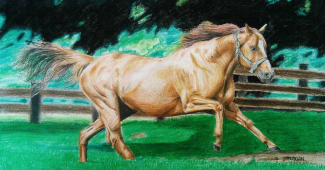 This is my pencil drawing of a running Horse by TheTrialBeat