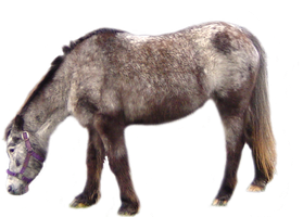 Grey horse PNG stock by lubman