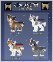 CloudyCliff | KITTEN TRYOUTS | TWG by rainwolfeh