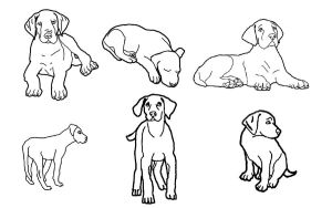 Free great dane puppy lineart by WolfgirlsAdopts