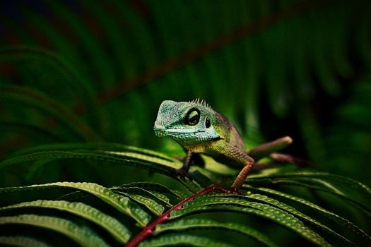 Green Crested Lizard by chewygummies