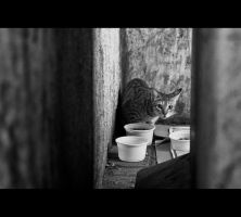 Urban Cats - 00 by MARX77