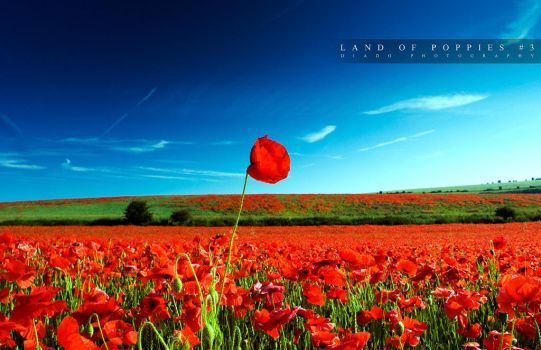 Land of Poppies 3 by diado
