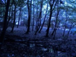 forest 08 by Pagan-Stock