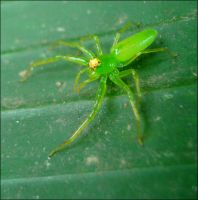 Green spider II by earthly-muse