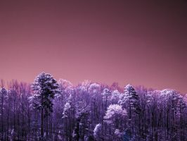 Infrared Summer by blackismyheart90
