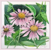 Echinacea by solgas