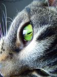 Cat's Eye by shadow-wolf-revival