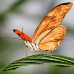 Butterfly Vl by s-kmp