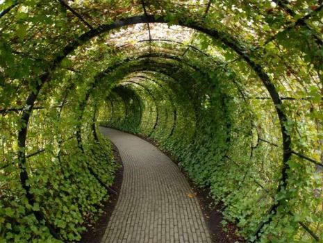 Verde/tunel by MrcohAnt