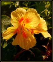 Simply a pretty color flower... by AudraMBlackburnsArt