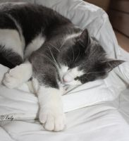 Sleeping Cat . by au-bout-de-mes-reves