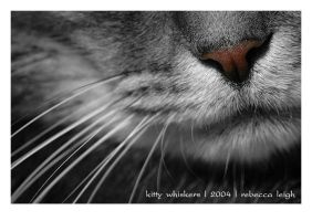kitty whiskers by cat-lovers