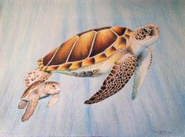 sea turtles by tigerpurple