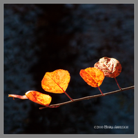 Orange Leaves Alight by Mogrianne