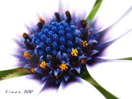 the beauty in the center by sinanTR