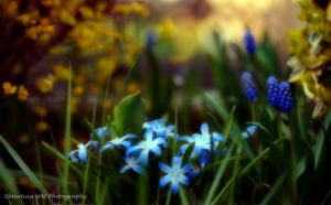 Signs of spring by Martina-WW
