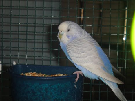 What'chy Look'in at? by iluvbudgie
