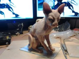 Sphynx cat by AttilaMaros