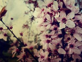 Blossom by assica