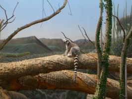 Ring-Tailed Lemur Stock by RX-stock