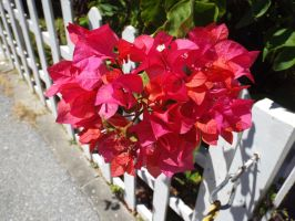Flowers on a Fence by BananaGosip808