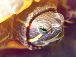Eyes of a Turtle by foogie