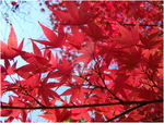 Autumn Stars by Photographic-Candy