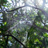 Spin a Web of Beauty by weirdlynormal249