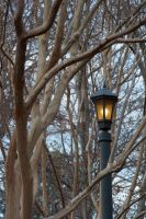 A Little Slice of Narnia by artsyfaux