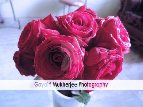 Roses are red by gayatri23119
