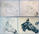Horse head musculature study by emeralds0ng