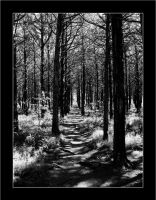 Parallel Forest by scottdoom