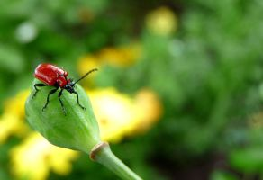 Bold red bug by Mosterdmuisje