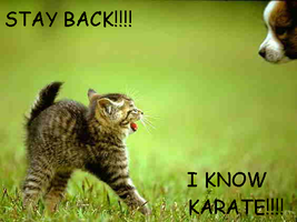 lolcat:karate by soryaseroth