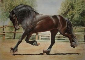 Friesian horse new version by PASTELIZATOR