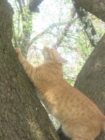 climbing cat 03 by CotyStock