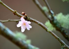 Early Spring by Momenti-Photo