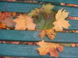 Leaves on the Bench by DarthTepes