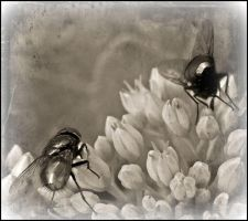 Black flies... by ansdesign