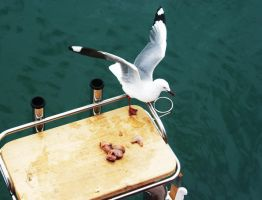 Seagull by postmanimal