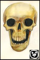 Water Colour Skull by heely
