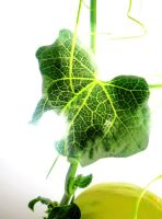 The Beautiful Veins of a Leaf by GraceDoragon