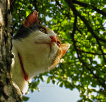 Cat on tree by TigresSinai