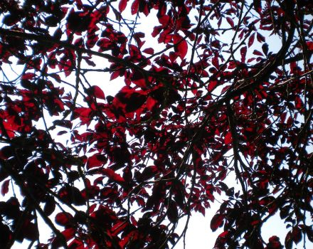 A net of red leaves by montmartre96