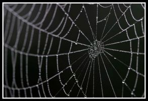 Widowed Web by drexer22
