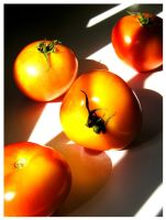 tomatoes again by mR-StIck