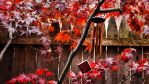 Blustery autumn wind by herbalcell